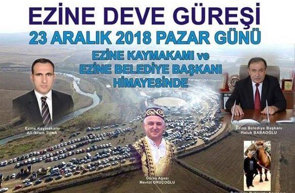 Yılın İddialı Deve Güreşi 23 Aralık'ta Ezine'de Yapılacak